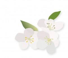 Blüten_groß