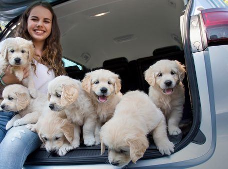 Practice makes puppy perfect: Puppies that travel in the Zafira from an early age are much better car-passengers when they grow up.