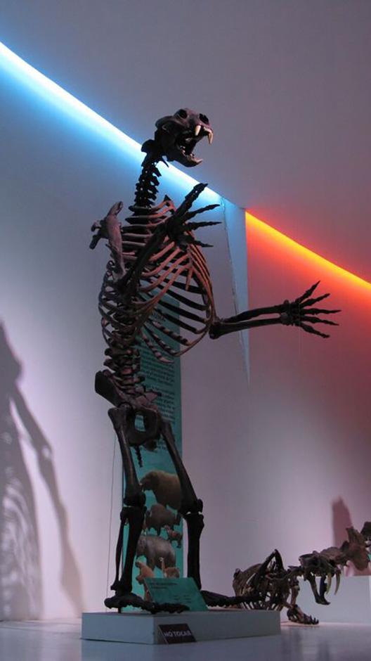 Trotz des beträchtlichen Arbeitspensums nahm sich Thomas Gabmayr für einen Museumsbesuch Zeit – die Coahuila-Wüste im Nordosten Mexikos ist wegen ihrer über 72 Millionen Jahre alten Dinosaurier berühmt