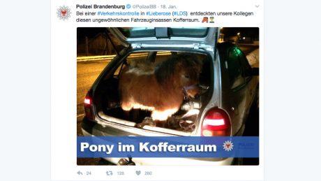 Pony_im_Kofferraum