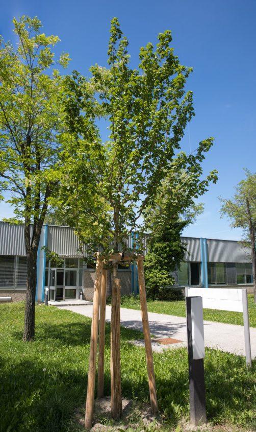 Wildlife Habitat Council - frisch gesetzter Baum verkleinert