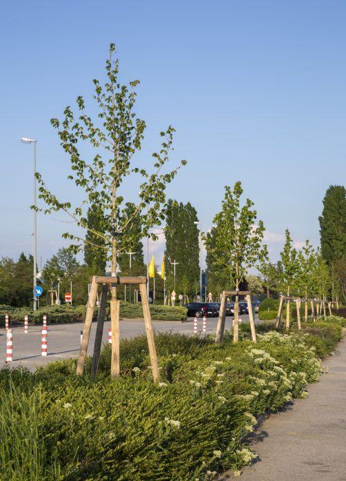 Wildlife Habitat Council - neu gesetzte Baumhaseln